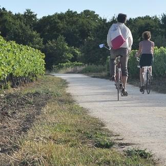 Vignes vélo piste cyclable La Thibaudière 01-09-2013 18-30-14