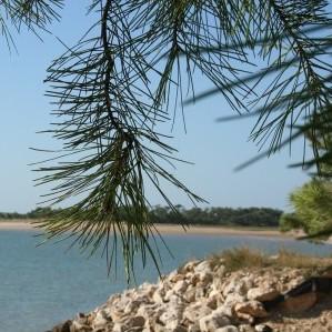 Forêt+plage 234